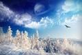 Картинка зима, небо, снег, деревья, орел, планета