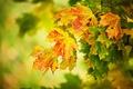 Картинка жёлтые, макро, осень, листья