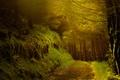 Картинка дорога, осень, лес, деревья, вечер