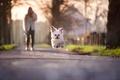 Картинка бег, прыжок, собачка
