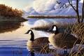 Картинка Evening Rest, тихая заводь, переленые птицы, Jeff Hoff, живопись, утки, гуси, озеро, вечер, осень, стая ...