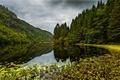 Картинка лес, озеро, Норвегия, Norway, Osteroy, Kossdalen valley, Остерёй