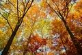 Картинка trees, autumn, leaves, autumn colors, fall, foliage, woodland, fall colors