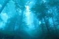 Картинка лес, деревья, синий, туман