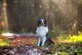 Картинка друг, дорога, собака