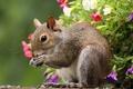 Картинка Белка, семечки, цветы
