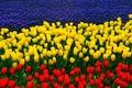 Картинка тюльпаны, триколор, люпины, флаг ростовской области