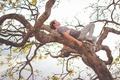 Картинка sleeping, tree, branches, man
