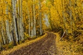 Картинка golden road, road, autumn, fall, autumn colors, leaves, fall colors, foliage