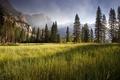 Картинка Yosemite Valley, meadow, early morning