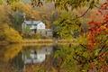 Картинка озеро, после дождя, дом, ветки, осень, лес