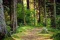 Картинка лето, тропа, лес, природа