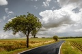 Картинка дорога, tree, дерево, grass, поле, горизонт, sky, облака, весна, spring, clouds, horizon, природа, field, небо, ...