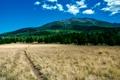 Картинка США, лес, трава, небо, облака, поле, тропинка, Аризона, деревья, горы