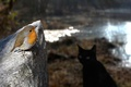 Картинка взгляд, камень, маленькая, птичка, опасность, кот