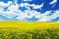 Картинка flowers, the sky, цветочки, ablakatova, облака.поле, the nature, природа, небо