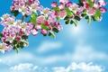 Картинка яблоня, trees, Sky, цветение, весна, Flowering