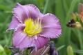 Картинка Purple flower, Цветок, Bokeh, Macro, макро, боке