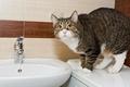 Картинка кот, вода, раковина, ванна, Cat