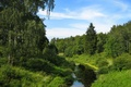 Картинка Зелень, ручей, небо, берёза