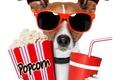 Картинка Собака, очки, попкорн, напиток