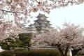 Картинка Himedzi, цветение, Japan, Япония, замок