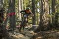 Картинка спорт, велосипед, лес, гонка