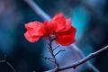 Картинка природа, ветка, красные, макро, листья