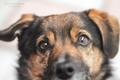 Картинка глаза, взгляд, друг, преданность, собака, дворняга, дворняжка