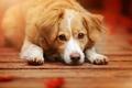 Картинка собака, взгляд, морда