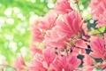 Картинка flowers, spring, bloom, bokeh