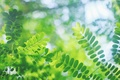 Картинка размытость, макро, Веточки, блики, зелёные, листья