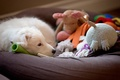 Картинка взгляд, уют, дом, друг, игрушки, собака