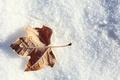 Картинка листок, иней, лист, снег, зима