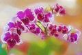Картинка цветы, штрих, краски, лепестки, орхидея, линии