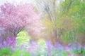 Картинка свежесть, зелень, цветение, вишня, деревья, весна