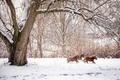 Картинка животные, снег, природа, зима, деревья, лошади, кони, ограда, ветки