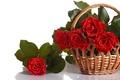 Картинка красный, цветы, лепестки, розы, букет