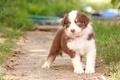 Картинка собака, боке, щенок