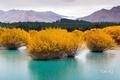 Картинка trees, yellow, water