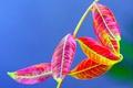 Картинка цвет, ветка, осень, листья, растение
