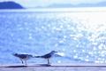 Картинка море, волны, лето, вода, солнце, свет, птицы, блики, сияние, тепло, чайки