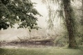 Картинка лес, осень, туман