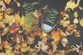 Картинка leaves, autumn, All Star