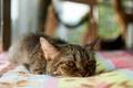 Картинка кот, комната, котэ, лежа