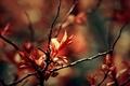 Картинка макро, листва, ветки, весна