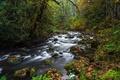 Картинка камни, лес, ручей, опавшие, осень, мох, листья