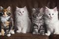 Картинка диван, котята, четверо