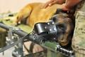 Картинка Собака, друг, армия