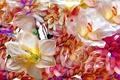 Картинка цветы, клумба, лепестки, рендеринг, природа